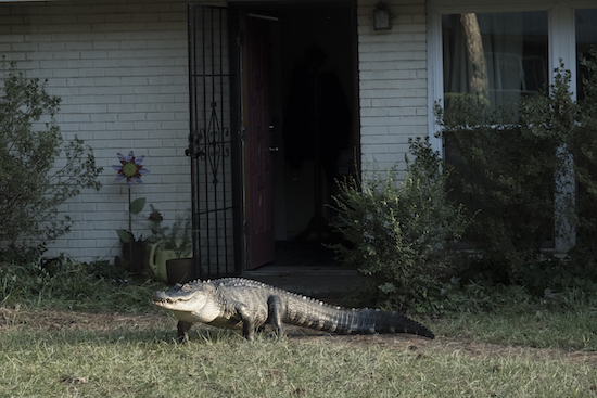 "ATLANTA: ""Alligator Man"""