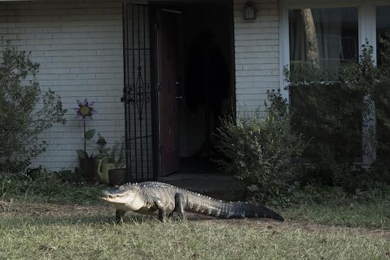 ATLANTA: 'Alligator Man'