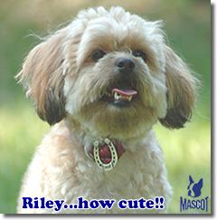Mascot, Riley