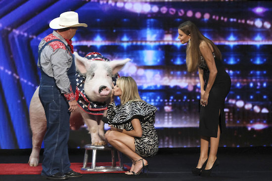 Americas Got Talent Pigs
